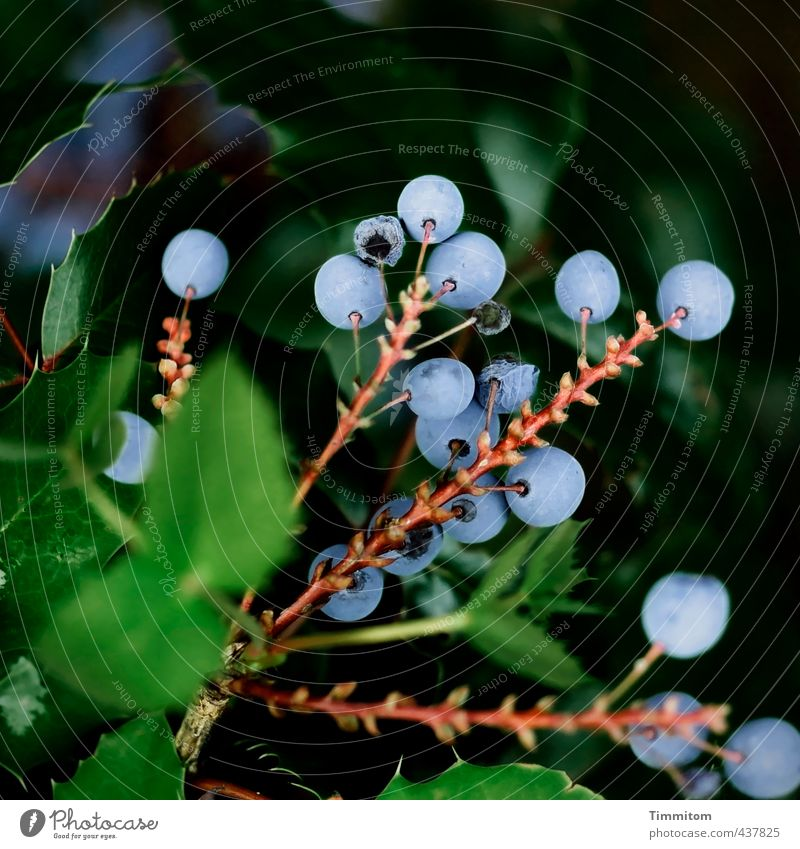 Nature Blue Green Plant Leaf Black Environment Natural Brown Growth Esthetic Berries