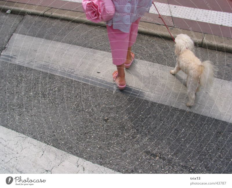 Crossing the zebra crossing Traverse Zebra crossing Woman Under Dog Stripe Pink Bag Pants Footwear Together Obey Poodle Gray Striped White 2 Feminine Animal