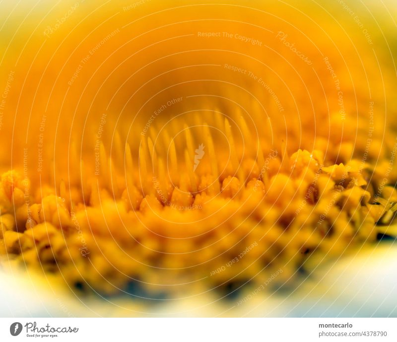 Yellow veiling blurriness Shallow depth of field Macro (Extreme close-up) Detail Close-up Colour photo naturally Near Small Fresh Authentic Thin Fragrance