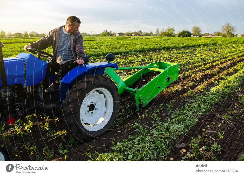 Farmer digs out a crop of potatoes. Harvest first potatoes in early spring. Farming and farmland. Agro industry and agribusiness. Harvesting mechanization in developing countries. Support for farms