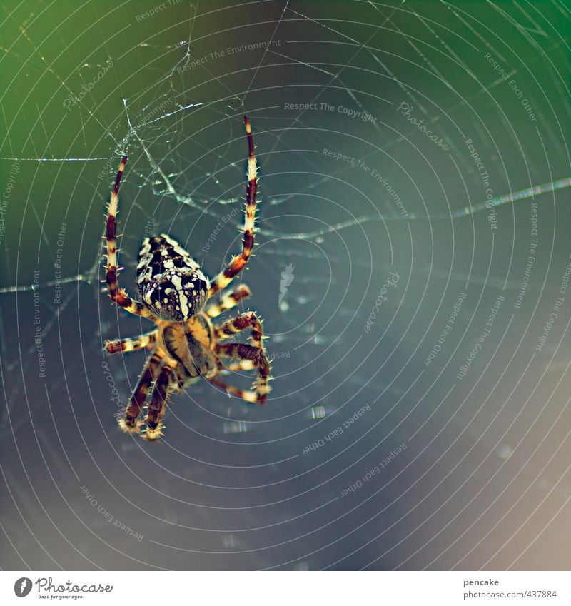 Nature Summer Animal Garden Wait Observe Sign Catch Hang To feed Trap Crawl Spider Spider's web Crouch To swing
