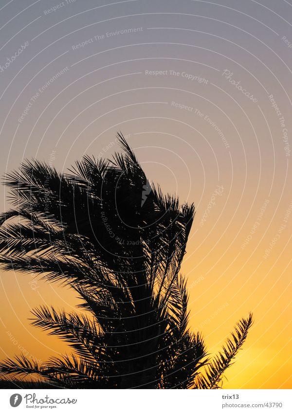 Sky Vacation & Travel Black Yellow Orange Wind Palm tree Egypt Hurgahada Red Sea