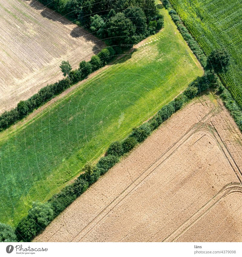 small-scale agriculture from above Agriculture Field Bird's-eye view Landscape Grain Agricultural crop Grain field Nutrition Deserted Summer Cornfield