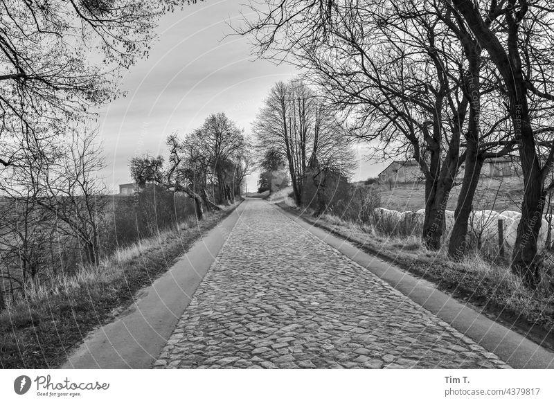 an old cobblestone road in the Uckermark region of Germany Cobblestones Brandenburg b/w Winter Black & white photo Exterior shot Day B/W Deserted Loneliness