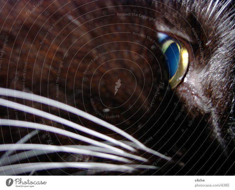 pensive cat Cat Black Moustache Think