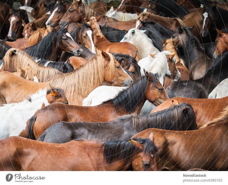 herd of wild horses reunited outdoors animals spain brown together different swift fast horse fauna beautiful mammal horizontal agriculture free-range