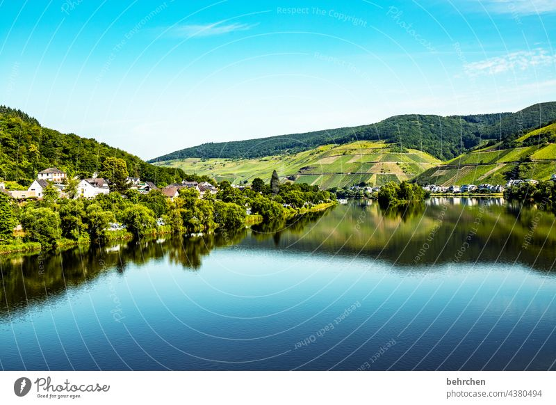 Smooth as a mirror Wine growing Vineyard Colour photo River Town Forest Nature Exterior shot Vacation & Travel Environment Sky Freedom Far-off places Trip