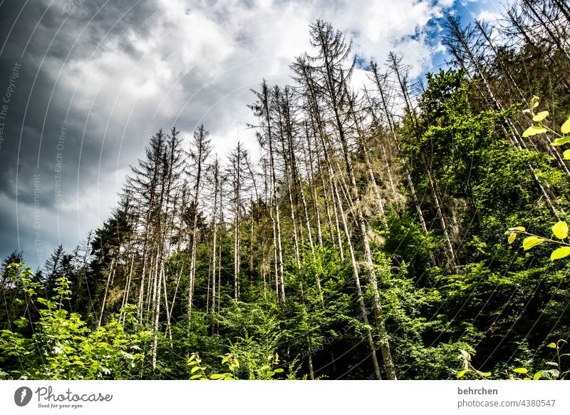 there we have the salad | forest dieback Climate change Logging Forest death Coniferous trees Environmental protection Plant Wood Forestry Hunsrück