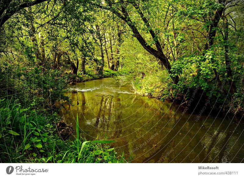At the river Nature Water Spring Tree Foliage plant River bank Green Colour photo Exterior shot Day Reflection