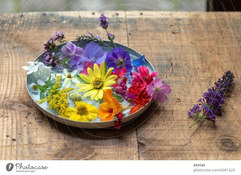 There is still summer - Fragrant bowl with fresh colorful summer flowers on sturdy wooden table Flower bowl blossoms Summerflower Summer feeling Summery
