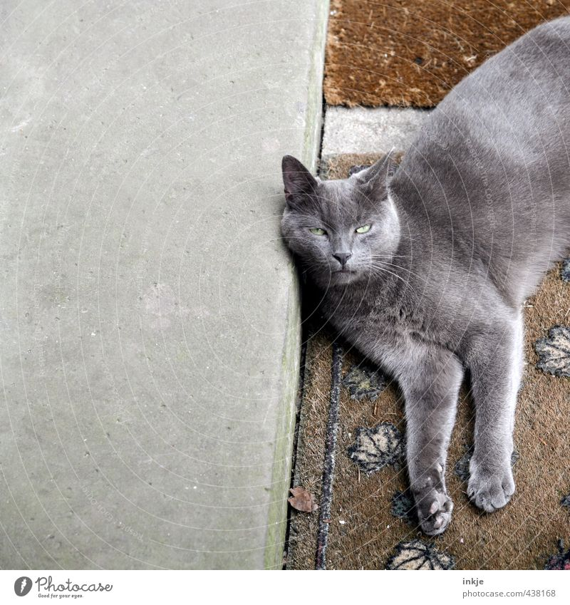 Hey, Dude. Terrace Doormat Stairs Concrete slab Cat Animal face 1 Stone Corner Lie Cool (slang) Emotions Fatigue Reluctance Exhaustion Relaxation Break Calm