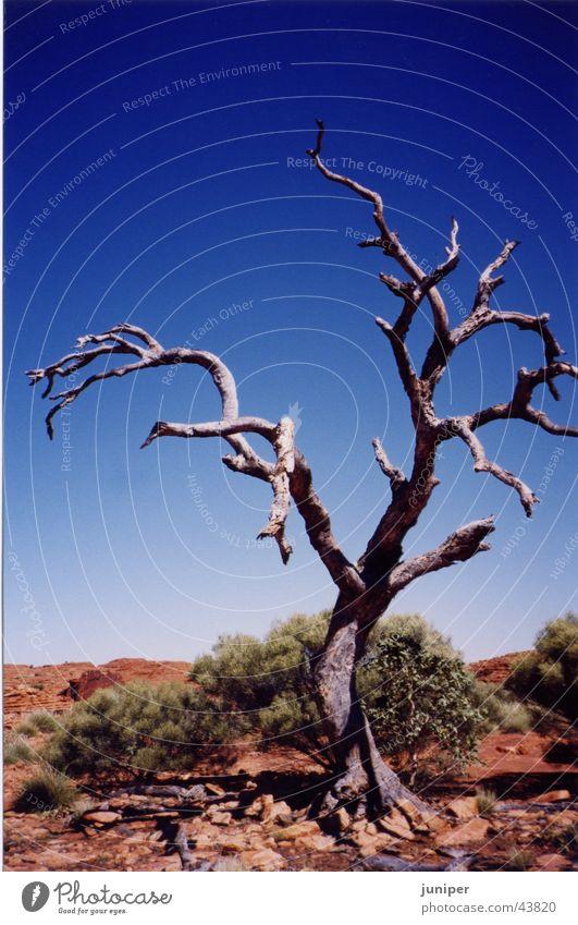 White Tree Loneliness Desert Australia Tree bark Sparse Outback Eucalyptus tree