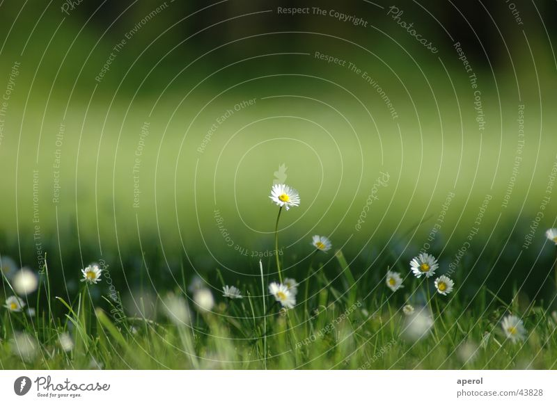 Flower Green Summer Calm Meadow Spring Power Growth Daisy Open-air swimming pool Maturing time