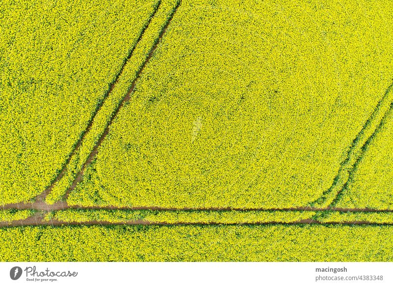 Rape field from above Canola Canola field Yellow Field Plant Spring Agriculture Agricultural crop Blossom Blossoming Oilseed rape flower Exterior shot