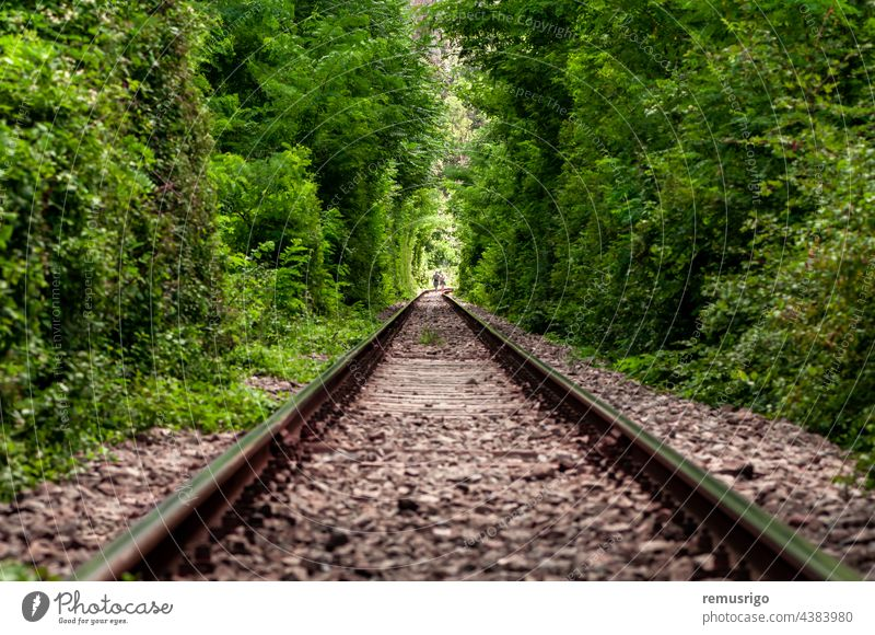 A natural love tunnel formed by trains cutting off the branches of the trees. Green foliage. Unrecognizable people 2016 Romania Vadu Crisului green grees