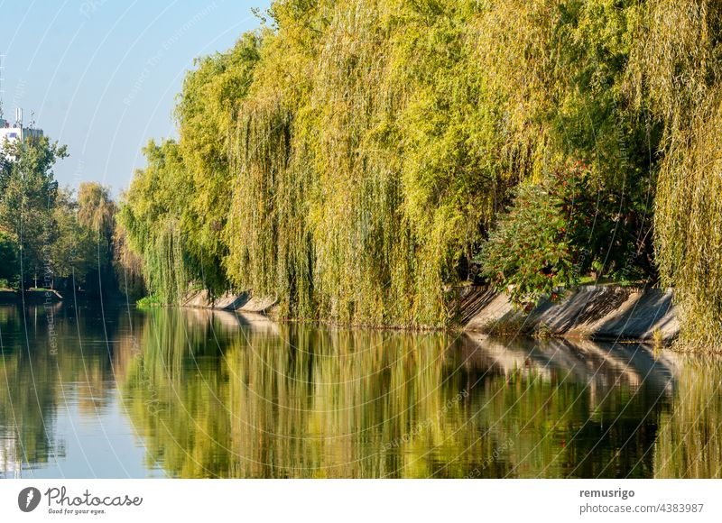 A view of the Bega river early in the morning with clear blue sky 2016 Romania Timisoara background city cityscape day landscape natural nature outdoors park