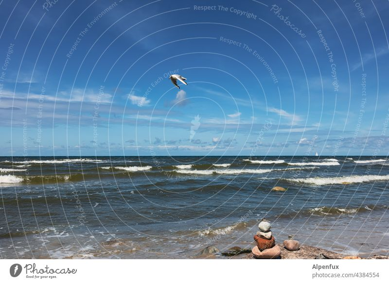 beautiful day at the sea - stones defy the waves - seagull flies past. Ocean Seagull Water Sky Flying Baltic Sea Baltic coast Nature vacation Vacation & Travel