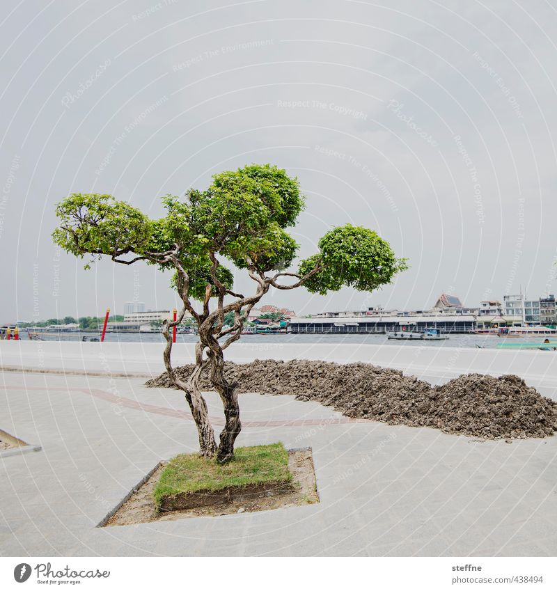 Clean Photographer in Dirty City Tree River bank Bangkok Thailand Asia South East Asia Town Old town Deserted Esthetic Exceptional Earth Tuft Colour photo