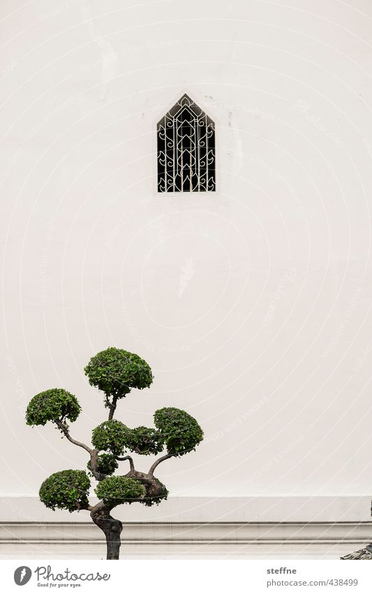 Tree Calm Window Facade Esthetic Harmonious Meditation Monastery Bonsar