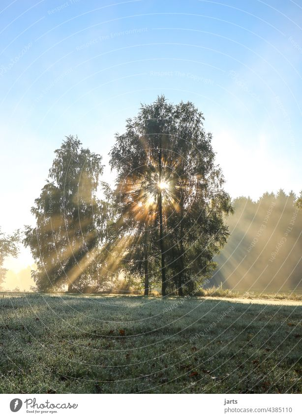 Sunday morning in a meadow at the edge of the forest Sunrise Sunbeam Light Sunlight Tree Forest Edge of the forest Meadow Exterior shot Nature Colour photo