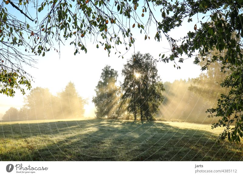 Sunrise on a meadow at the edge of the forest Sunbeam Light Sunlight Tree Forest Edge of the forest Sunday Meadow Exterior shot Nature Colour photo Landscape