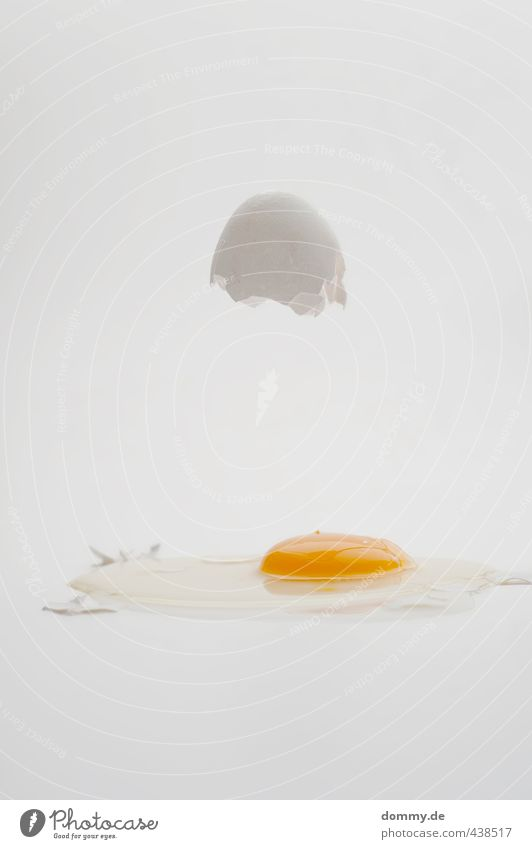 eggtest Food Nutrition Organic produce Destruction Egg Eggshell Broken Struck Service Fried egg sunny-side up Raw Yolk Protein Clarity Considerable Bright Hover