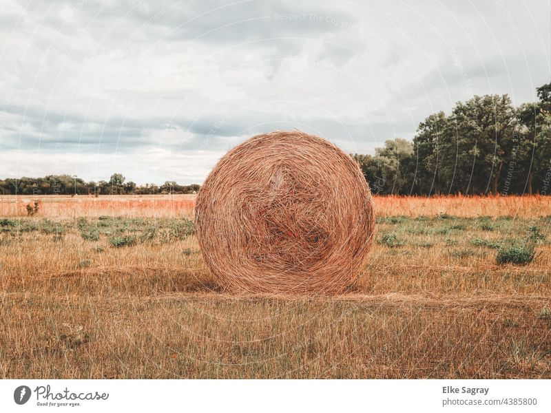 Straw bale rolled up on a field waiting for removal Field Summer Tree Nature Grass Deserted Sky Landscape Agriculture Copy Space top Exterior shot