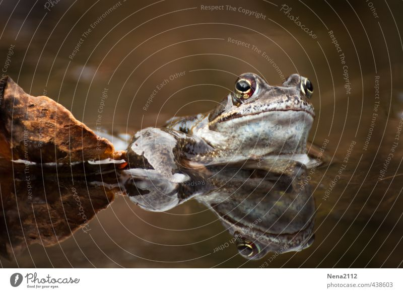 Autumn coloured... Environment Nature Water Summer Leaf Garden Park Forest Animal Frog Relaxation Wait Sunbathing Brown Painted frog Toad migration Smoothness