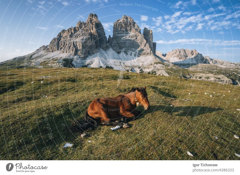 Wild horse resting in a meadow with Tre Cime di Lavaredo peacks in background- Dolomites, Italy italy hiking dolomiti lavaredo cime tre landscape outdoor park