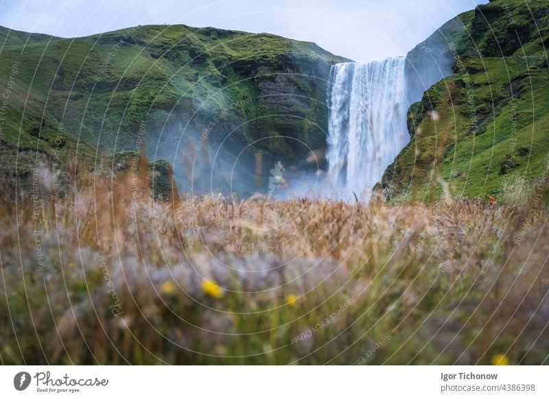 The most popular waterfall in Iceland - Skogafoss. Grass field in defocused foreground iceland skogafoss famous landscape river summer beautiful stream travel
