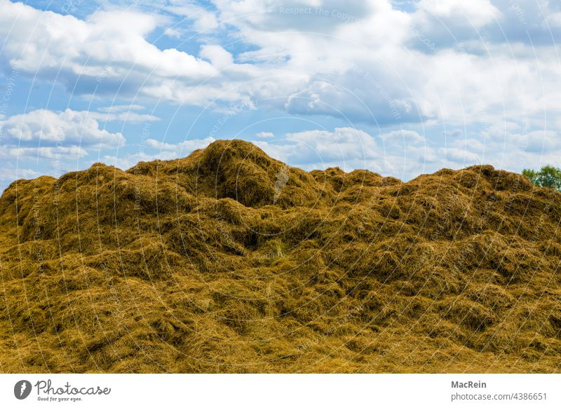 Haystack in a field, Lower Saxony, Germany acre Day Exterior shot Farm Sky Nature Agriculture Agricultural product Summer Cattle feed Clouds Shredded