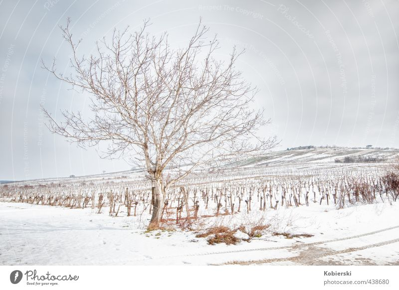Winter at the vineyard Vine Wine growing Alcoholic drinks Senses Relaxation Landscape Animal Clouds Ice Frost Snow Tree Hill Vineyard Freeze Faded Cold
