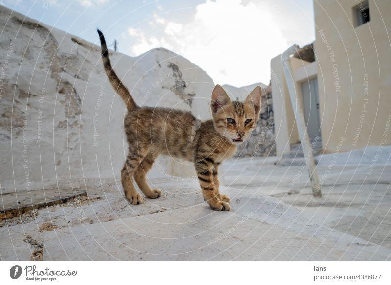 kitten Cat Cute Small Kitten Enchanting Copy Space Santorini Deserted Old town