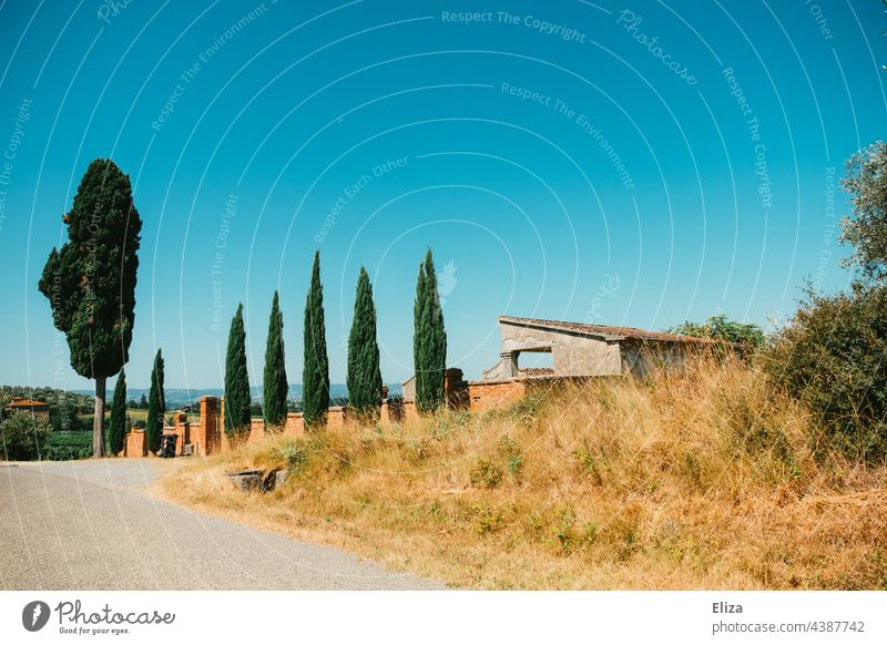 Cypress trees in front of an estate in Tuscany Cypresses Wall (barrier) Property Summer Blue sky Nature Italy Landscape