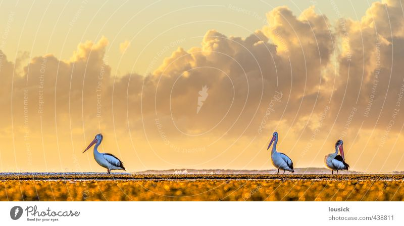 Pelicans at the beach Beautiful Vacation & Travel Sightseeing Summer Sun Beach Ocean Environment Nature Landscape Animal Clouds Spring Autumn Weather