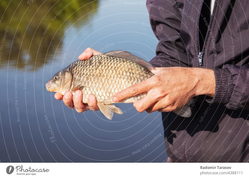 fisherman holding carp catch animal nature water freshwater fin hobby head river crucian hand big wildlife mouth light outdoor summer activity trophy scale