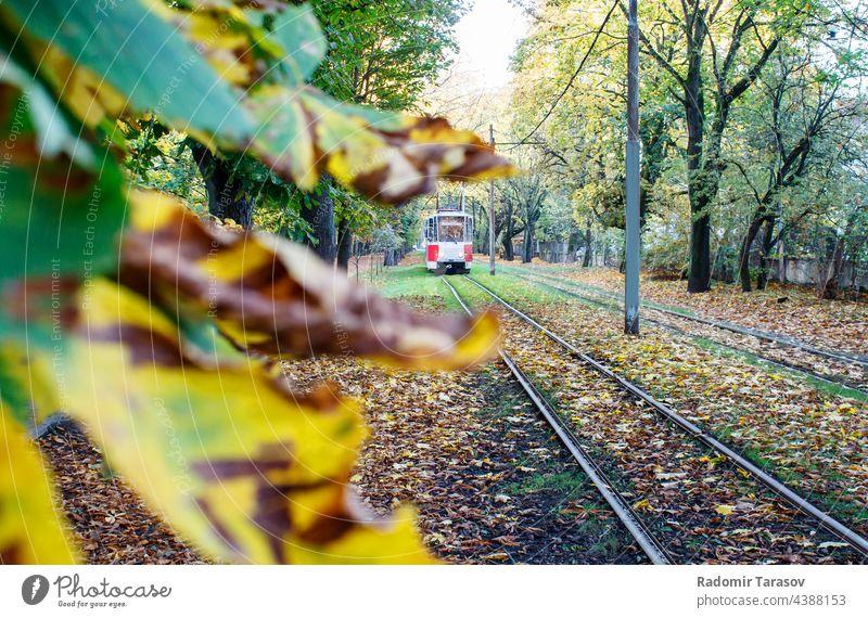 tram rides on rails in autumn railroad urban red railway tree tourism track nature retro transport travel landscape beauty path beautiful season natural