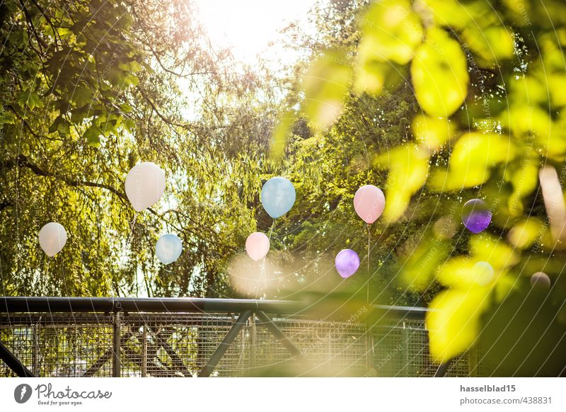 Relaxation Leaf Calm Joy Life Love Style Happy Laughter Lifestyle Feasts & Celebrations Party Contentment Birthday Happiness Dance