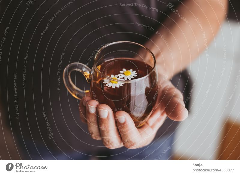 Man holding a cup of chamomile tea in his hand camomile tea stop Camomile blossom Medicinal plant Hot drink Healthy Blossom White Alternative medicine