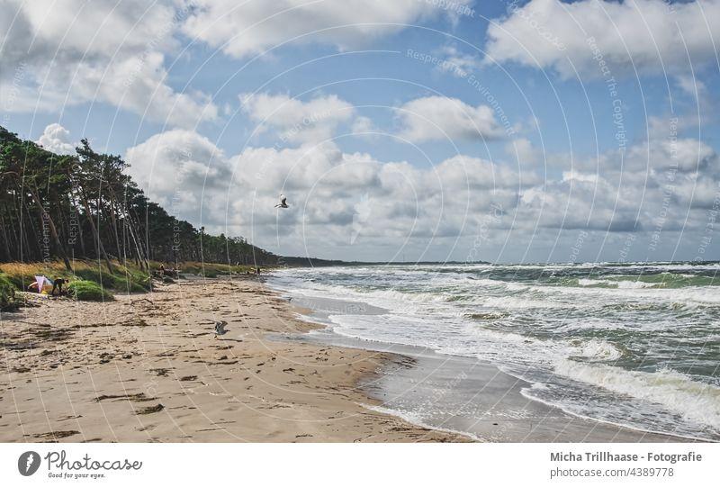West Beach Darss Fischland-Darss-Zingst Western Beach Baltic Sea coast Waves Water Ocean Sand trees Forest Sky Clouds Wind Sun Nature Landscape Seagull