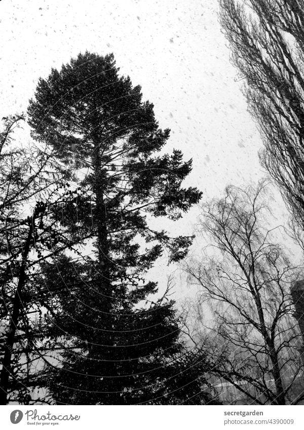 Colourful snow flurry blow snow Snow Black & white photo trees Tree Snowflake Winter Snowfall Cold Exterior shot Nature White Gray Deserted Weather Environment