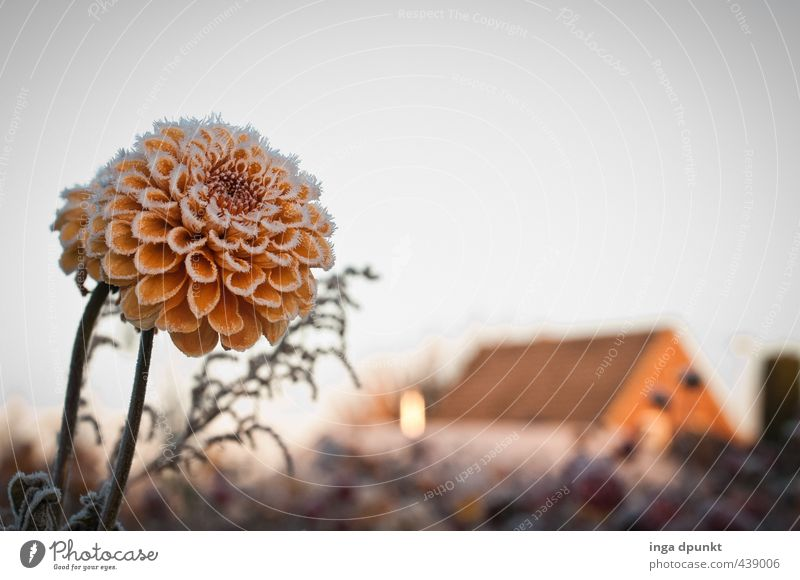 frost field Environment Nature Landscape Plant Winter Climate Weather Ice Frost Flower Blossom Foliage plant Meadow Deserted House (Residential Structure)