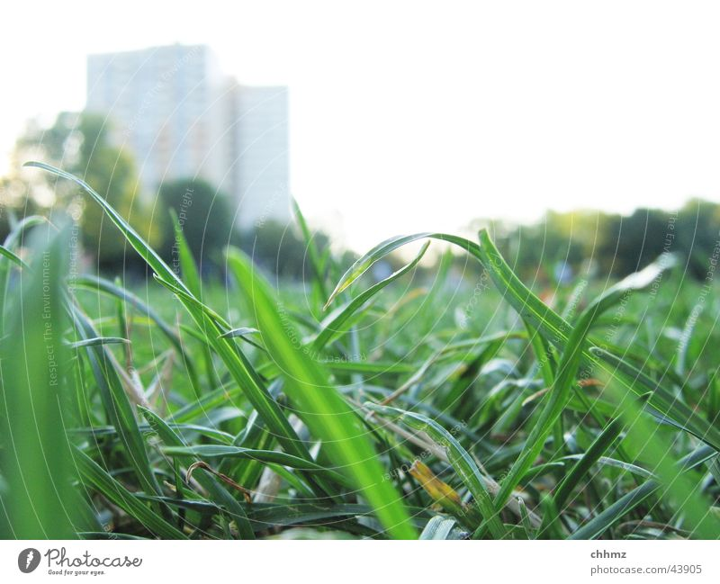 stalks Grass Meadow Blade of grass Green High-rise Blur Worm's-eye view Macro (Extreme close-up)