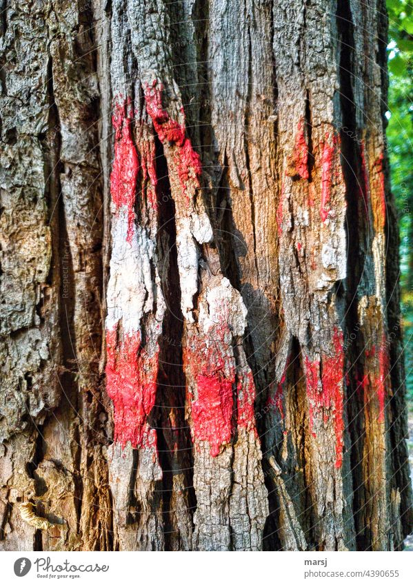 Trail marker on a tree Red-white-red Multicoloured Hiking Nature Tree Lanes & trails Vacation & Travel hiking sign Groundbreaking Signs and labeling Signage Old