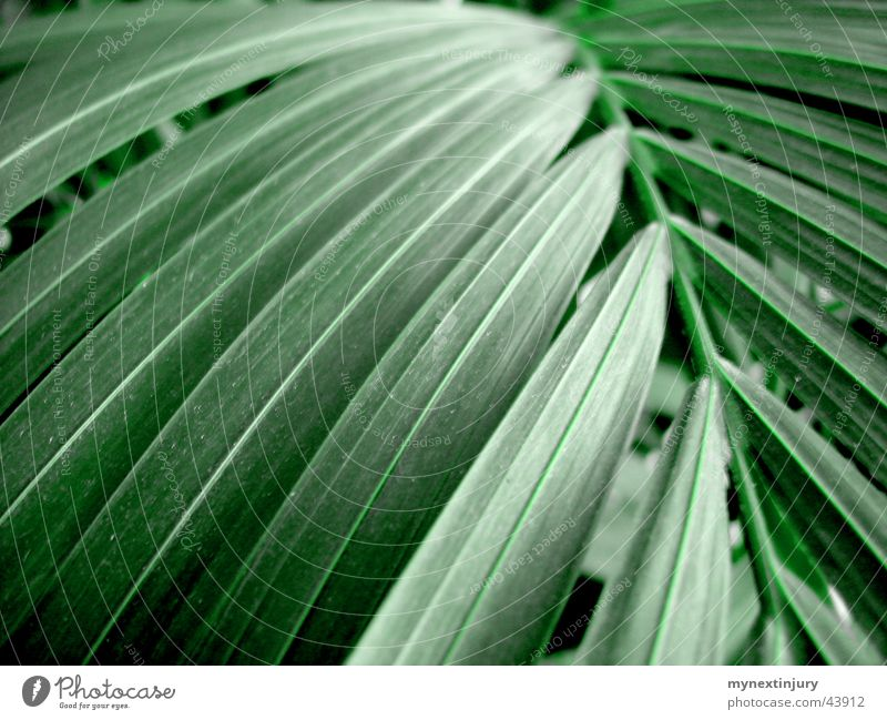 Green stuff in palm shape Leaf Palm tree Foliage plant Background picture Detail Marko Colour