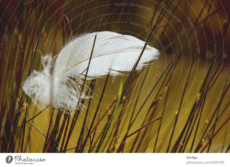 windswept Nature Summer Grass Bog Marsh Pond Feather Esthetic Beautiful Soft Green White Romance Serene Calm Wisdom Peace Ease Pure Fuzz 1 Colour photo