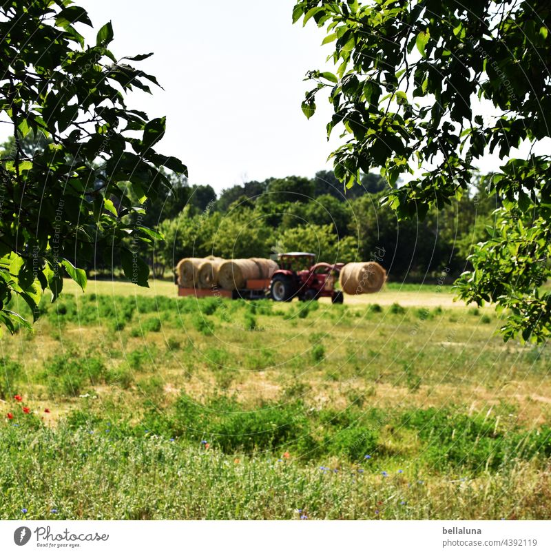 Today we have stoh, fresh from the tractor. Tractor Träcker Agriculture Nature Field Colour photo Environment Exterior shot Landscape Work and employment
