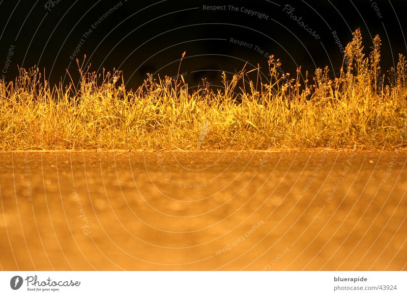 Grass by Night Field Black Dark Blade of grass Glow Street Gold Lamp