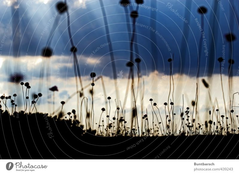 the world in the eyes of a beetle Nature Landscape Plant Sky Clouds Sunlight Grass Common thrift Meadow Field Dark Blue Black Colour photo Subdued colour