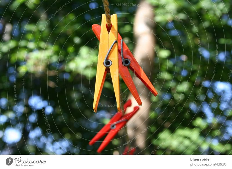 Tree Red Yellow Orange Background picture Rope Living or residing Laundry Holder Clothes peg
